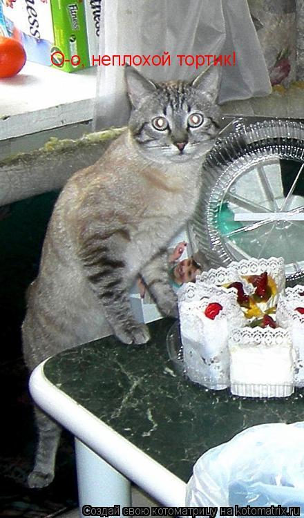 Котоматрица: О-о, неплохой тортик!