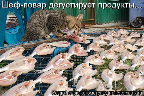 Котоматрица: Шеф-повар дегустирует продукты...