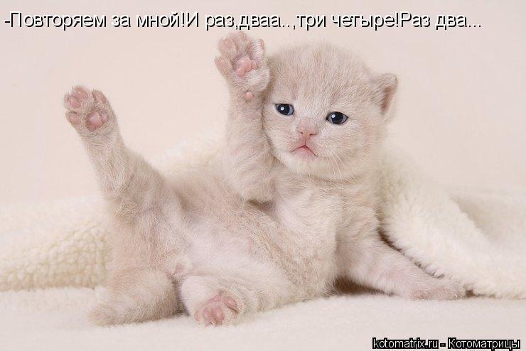 Котоматрица: -Повторяем за мной!И раз,дваа..,три четыре!Раз два...