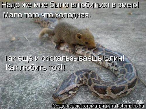Котоматрица: Надо же мне было влюбиться в змею! Мало того что холодная! Так ещё и соскальзываешь!Блин!  Как любить то?!!