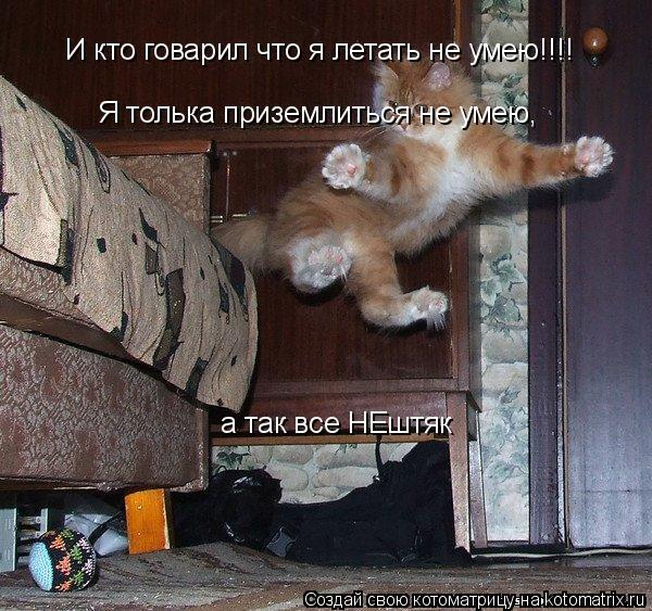 Котоматрица: И кто говарил что я летать не умею!!!!   Я толька приземлиться не умею,  а так все НЕштяк