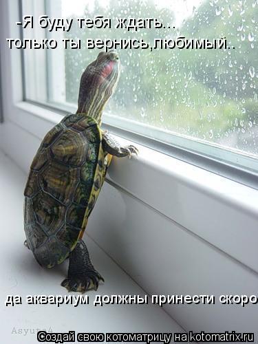 Котоматрица: -Я буду тебя ждать... только ты вернись,любимый.. да аквариум должны принести скоро