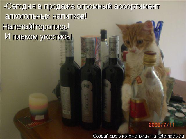 Котоматрица: -Сегодня в продаже огромный ассортимент алкогольных напитков! Налетай!торопись! И пивком угостись!