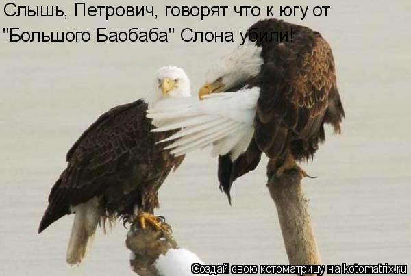 """Котоматрица: """"Большого Баобаба"""" Слона убили! Слышь, Петрович, говорят что к югу от"""