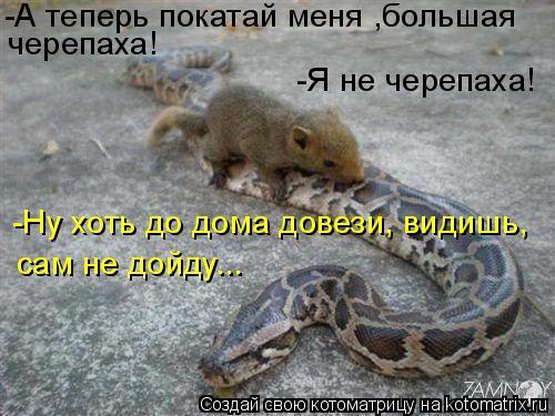 Котоматрица: -А теперь покатай меня ,большая черепаха! -Я не черепаха! -Ну хоть до дома довези, видишь, сам не дойду...