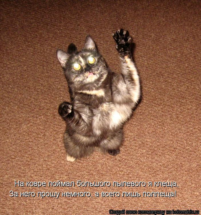 Котоматрица: На ковре поймал большого пылевого я клеща, За него прошу немного, а всего лишь поллеща!