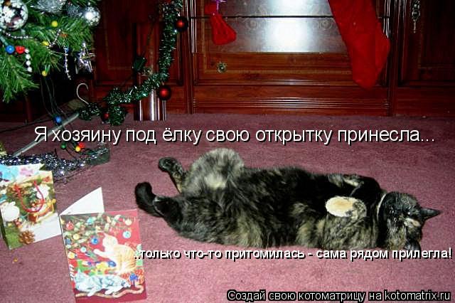 Котоматрица: Я хозяину под ёлку свою открытку принесла... ..только что-то притомилась - сама рядом прилегла!
