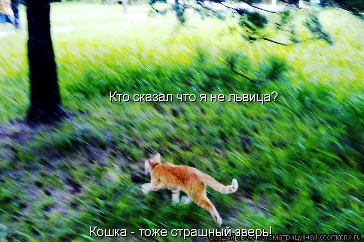 Котоматрица: Кто сказал что я не львица? Кошка - тоже страшный зверь!