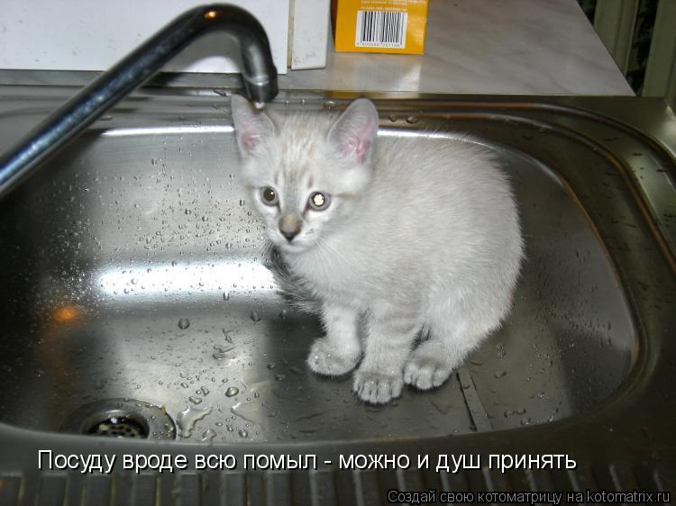 Котоматрица: Посуду вроде всю помыл - можно и душ принять