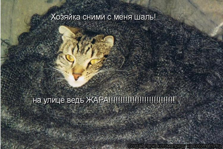 Котоматрица: Хозяйка сними с меня шаль! на улице ведь ЖАРА!!!!!!!!!!!!!!!!!!!!!!!!!!!!