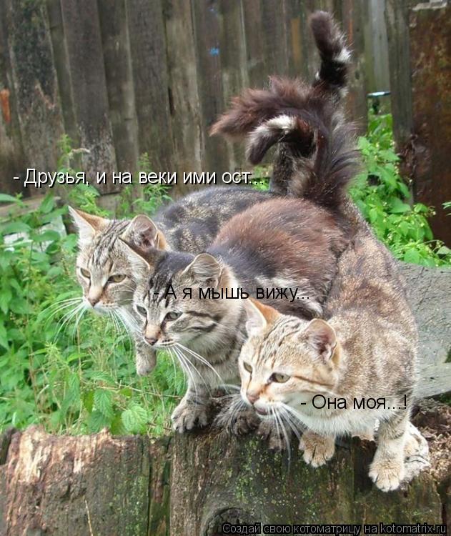 Котоматрица: - Друзья, и на веки ими ост... - А я мышь вижу... - Она моя...!