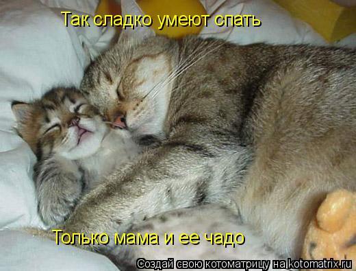 Котоматрица: Так сладко умеют спать Только мама и ее чадо