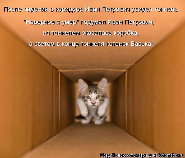 """Котоматрица: После падения в коридоре Иван Петрович увидел тоннель """"Наверное я умер"""" подумал Иван Петрович, но тоннелем оказалась коробка, а светом в кон"""
