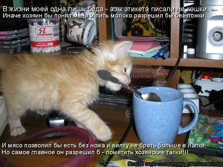 Котоматрица: В жизни моей одна лишь беда - азы этикета писали не кошки. Иначе хозяин бы понял меня и пить молоко разрешил бы без ложки. И мясо позволил бы е