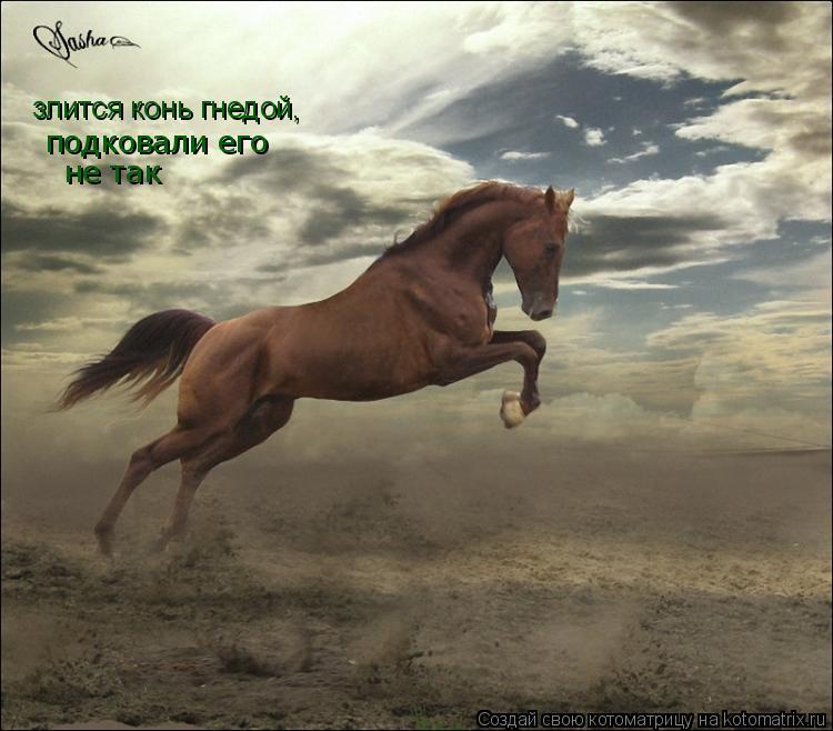 Котоматрица: злится конь гнедой, подковали его не так