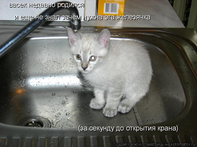 Котоматрица: васек недавно родился и еще не знал зачем нужна эта железячка (за секунду до открытия крана)