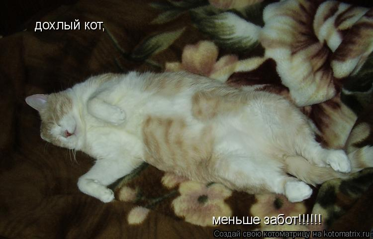 Котоматрица: дохлый кот, меньше забот!!!!!!