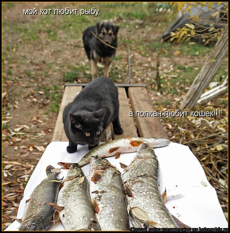 Котоматрица: мой кот любит рыбу, а полкан любит кошек!!!