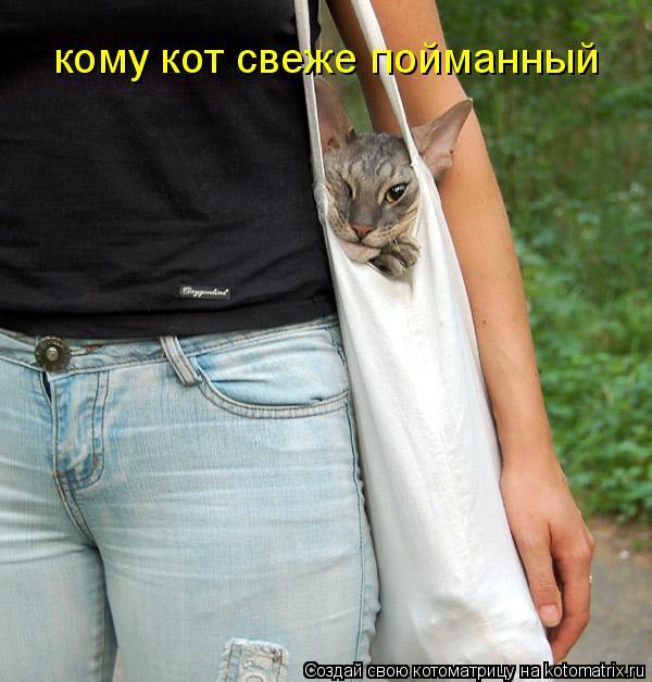 Котоматрица: кому кот свеже пойманный