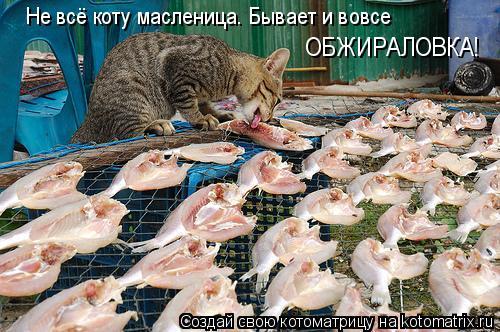 Котоматрица: Не всё коту масленица. Бывает и вовсе ОБЖИРАЛОВКА!