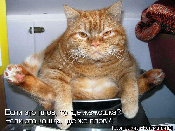 Котоматрица: Если это плов, то где же кошка? Если это кошка, где же плов?!