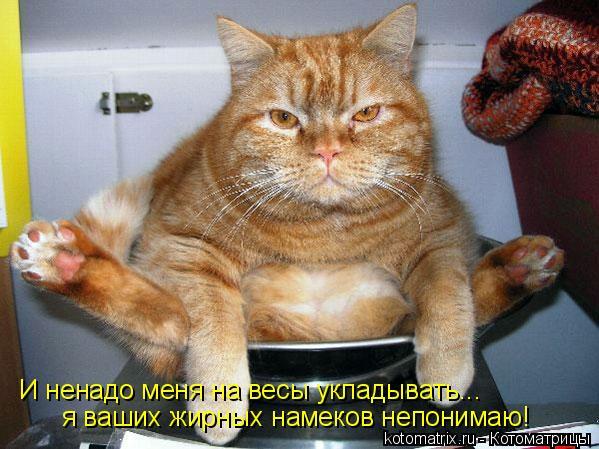 Котоматрица: И ненадо меня на весы укладывать... я ваших жирных намеков непонимаю!