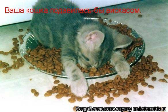 Котоматрица: Ваша кошка подавилась-бы вискасом.