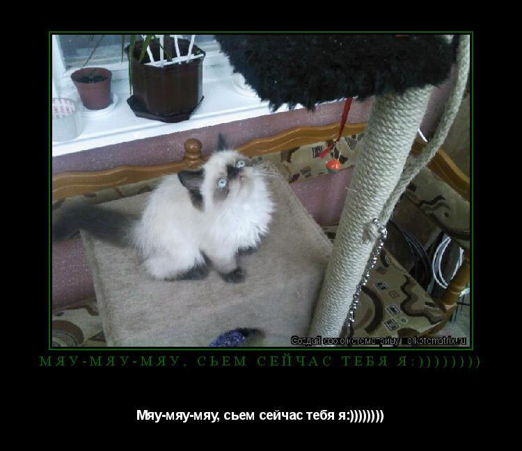 Котоматрица: Мяу-мяу-мяу, сьем сейчас тебя я:)))))))) Мяу-мяу-мяу, сьем сейчас тебя я:))))))))