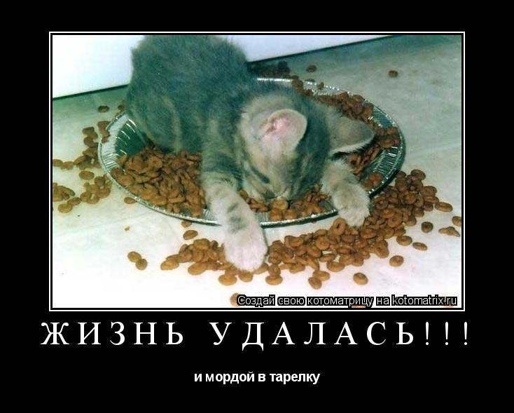 Котоматрица: Жизнь удалась!!! и мордой в тарелку