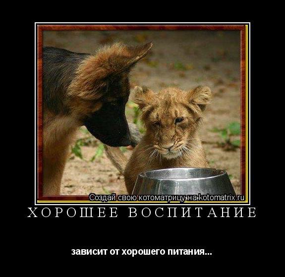 Котоматрица: ХОРОШЕЕ ВОСПИТАНИЕ зависит от хорошего питания...