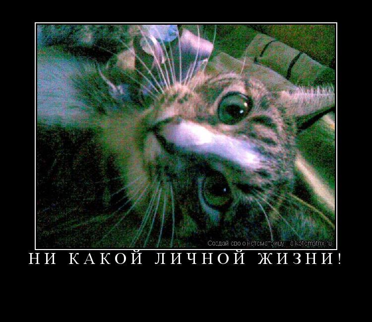 Котоматрица: Ни какой личной жизни!