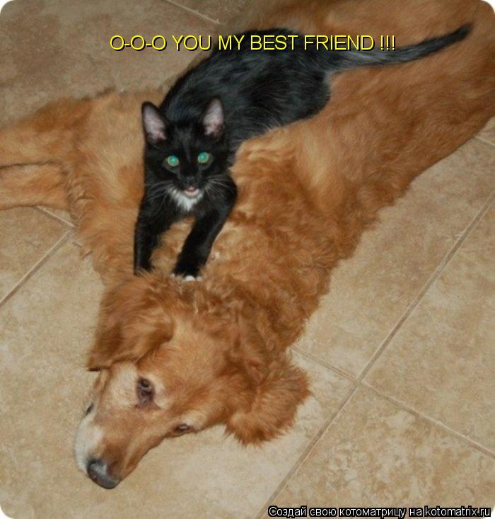 Котоматрица: O-O-O YOU MY BEST FRIEND !!!