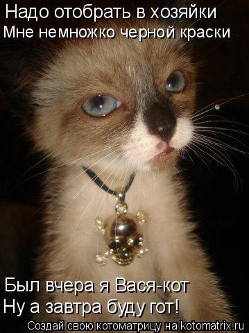 Котоматрица: Надо отобрать в хозяйки Мне немножко черной краски Был вчера я Вася-кот Ну а завтра буду гот!