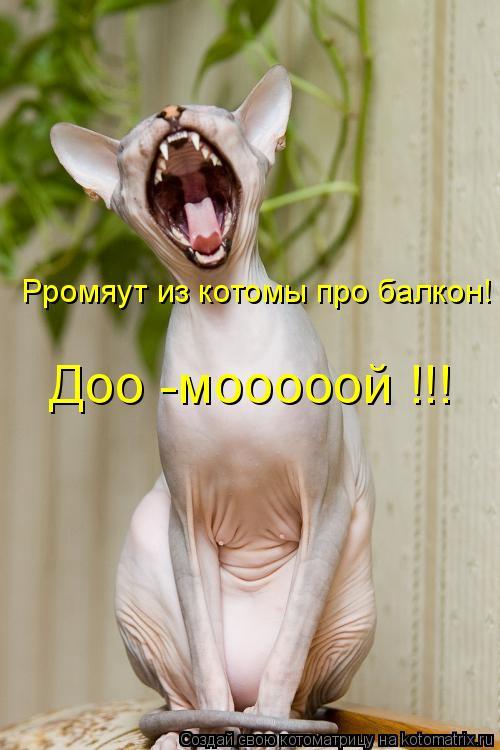 Котоматрица: Рромяут из котомы про балкон! Доо -мооооой !!!