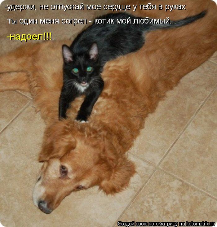 Котоматрица: ты один меня согрел - котик мой любимый... -удержи, не отпускай мое сердце у тебя в руках -надоел!!!