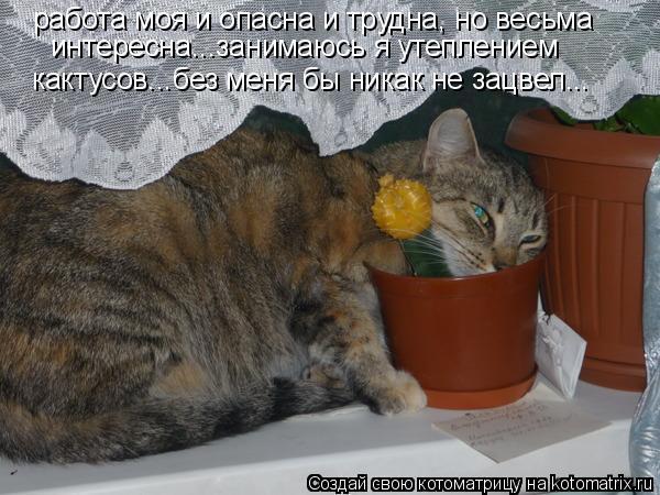 Котоматрица: работа моя и опасна и трудна, но весьма интересна...занимаюсь я утеплением  кактусов...без меня бы никак не зацвел...