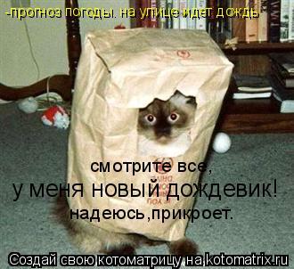 Котоматрица: смотрите все, у меня новый дождевик! надеюсь,прикроет. -прогноз погоды. на улице идет дождь