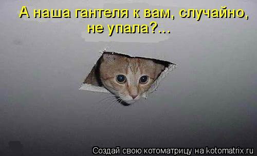 Котоматрица: А наша гантеля к вам, случайно, не упала?...