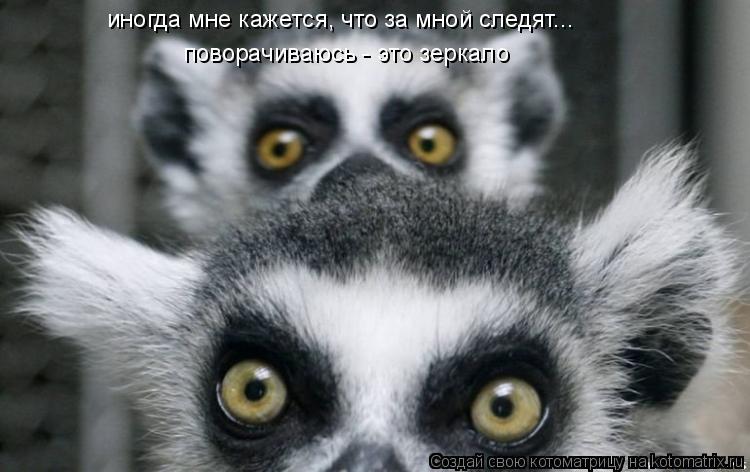 Котоматрица: иногда мне кажется, что за мной следят... поворачиваюсь - это зеркало