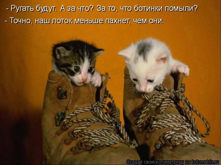 Котоматрица: - Ругать будут. А за что? За то, что ботинки помыли? - Точно, наш лоток меньше пахнет, чем они.