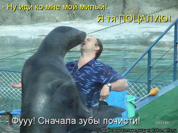 Котоматрица: - Ну иди ко мне мой милый! Я тя ПОЦАЛУЮ! - Фууу! Сначала зубы почисти!