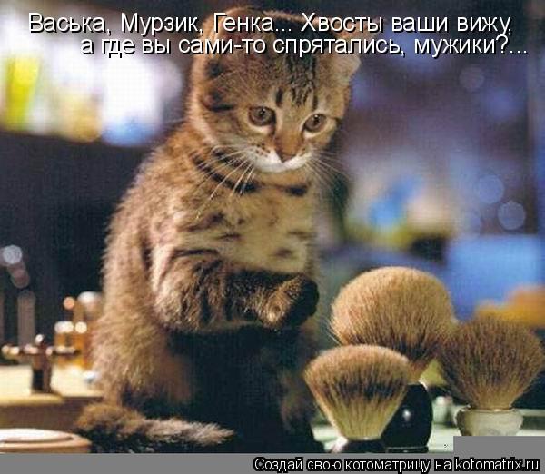 Котоматрица: Васька, Мурзик, Генка... Хвосты ваши вижу,  а где вы сами-то спрятались, мужики?...