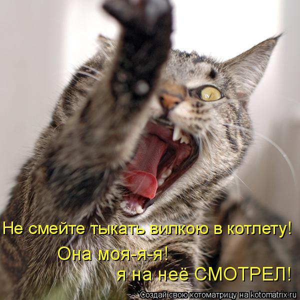 Котоматрица: Не смейте тыкать вилкою в котлету! я на неё СМОТРЕЛ! Она моя-я-я!