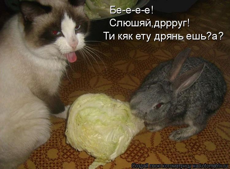 Котоматрица: Бе-е-е-е! Слюшяй,дррруг! Ти кяк ету дрянь ешь?а?