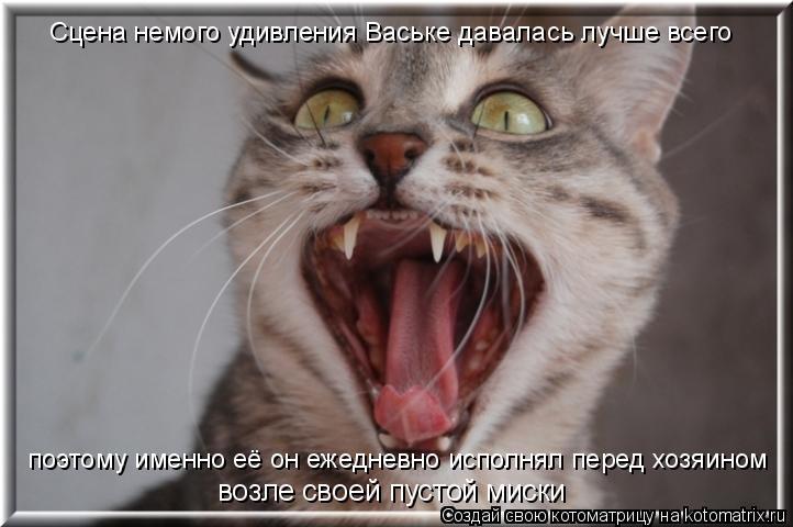 Котоматрица: Сцена немого удивления Ваське давалась лучше всего поэтому именно её он ежедневно исполнял перед хозяином возле своей пустой миски