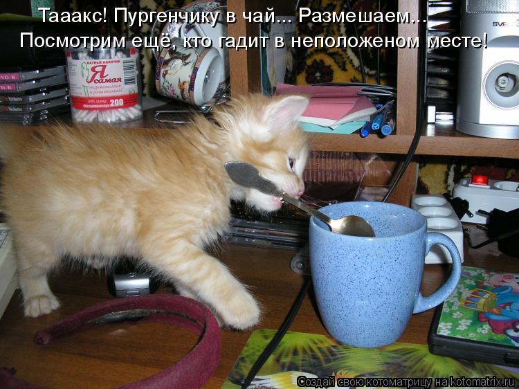 Котоматрица: Тааакс! Пургенчику в чай... Размешаем... Посмотрим ещё, кто гадит в неположеном месте!