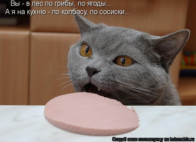 Котоматрица: Вы - в лес по грибы, по ягоды... А я на кухню - по колбасу, по сосиски...