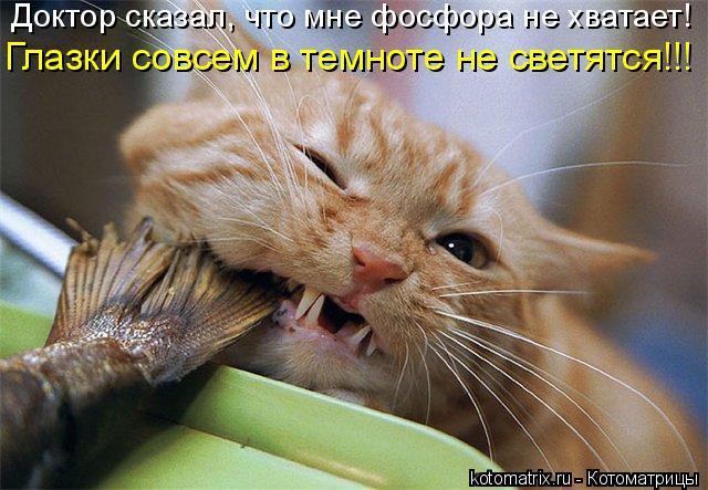 Котоматрица: Доктор сказал, что мне фосфора не хватает! Глазки совсем в темноте не светятся!!!