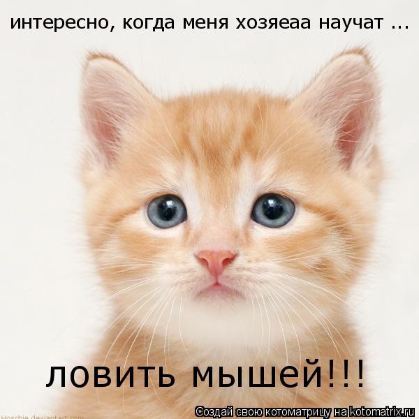 Котоматрица: интересно, когда меня хозяеаа научат ... ловить мышей!!!