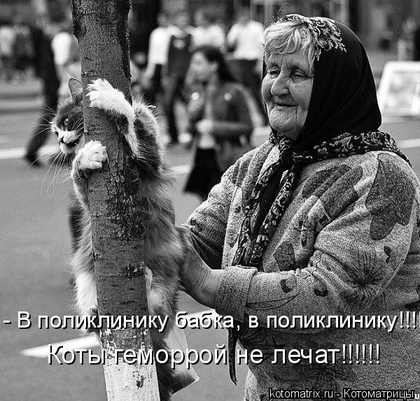 Котоматрица: - В поликлинику бабка, в поликлинику!!!!! Коты геморрой не лечат!!!!!!